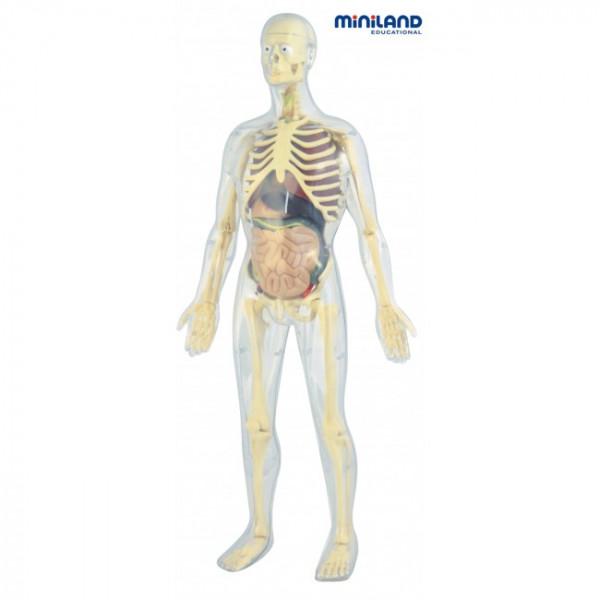 Human Anatomy Complete